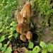 Fungi gathering