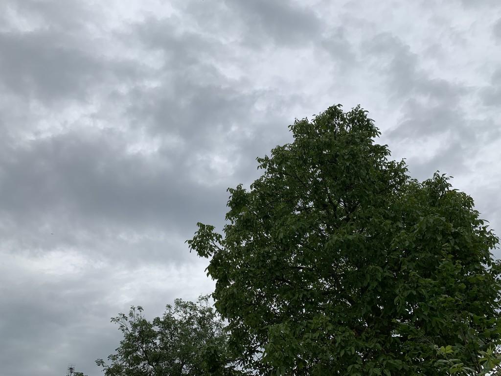 24th June 2019 by emmadurnford