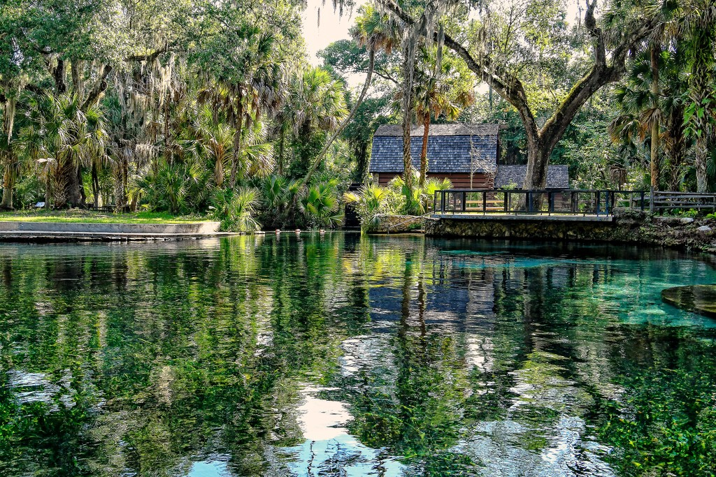 Juniper Springs by danette
