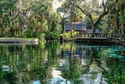 26th Jun 2019 - Juniper Springs