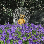 19th Jun 2019 - Bear necessity