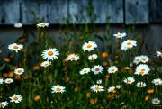 25th Jun 2019 - Wild flowers