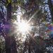 A little ray of sunshine (Axiom)