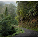 Mystical Kiwi Road... by julzmaioro