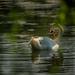 On the oxbow lake by haskar