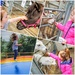 Sophia feeding the animals at Thornton Hall Farm, and enjoying a bounce on the bouncing pillows