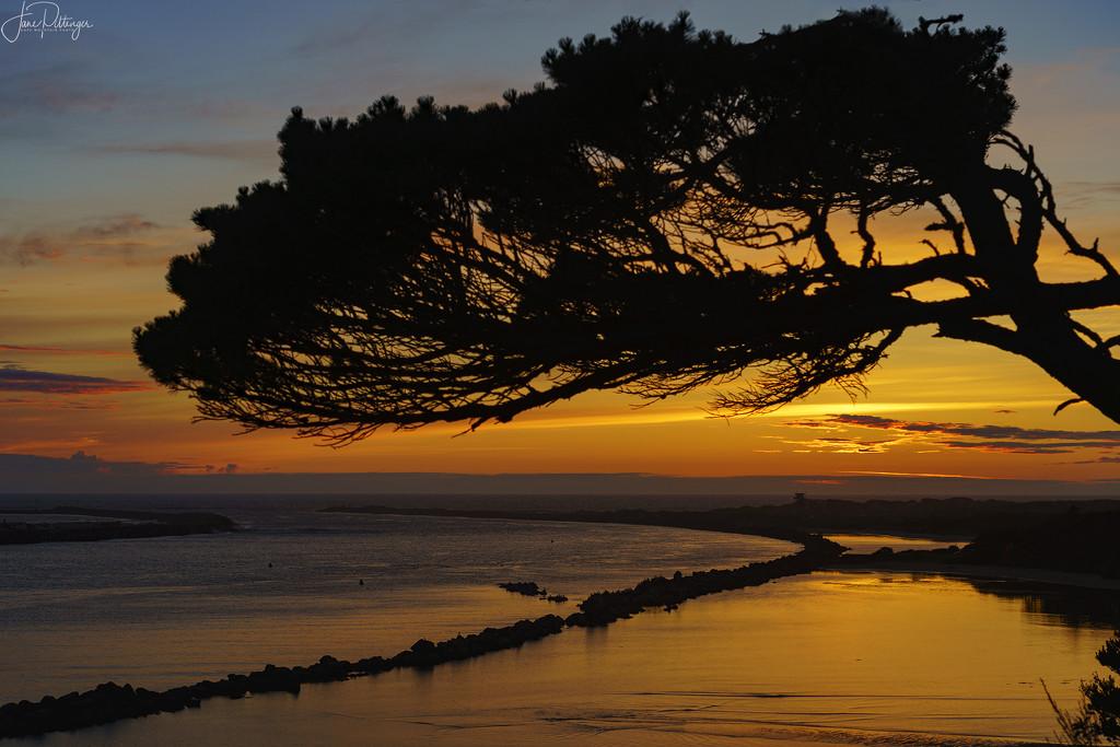 Tree Frames the Sunset at Harbor Vista by jgpittenger