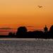Osprey Dawn by rjb71