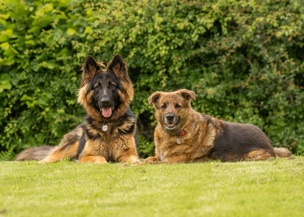 Cody and Tia  by shepherdmanswife