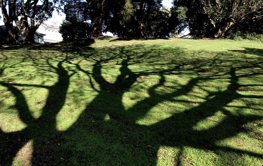 Shadow dance  by brigette