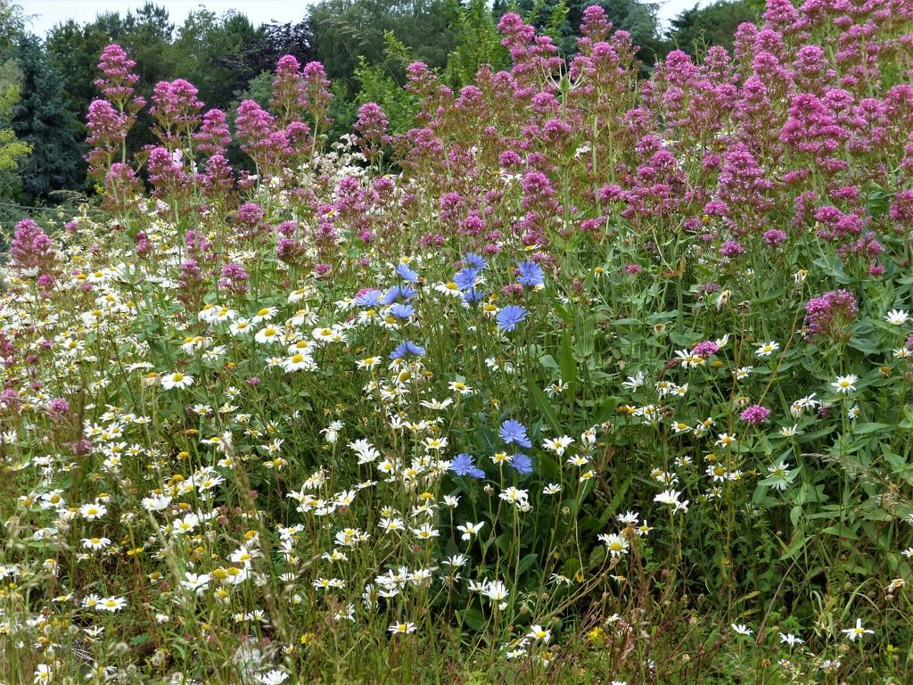 Wild Flowers...... by susiemc