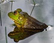 28th Jun 2019 - frog closeup