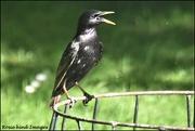 29th Jun 2019 - Will I be cooler if I keep my beak open?