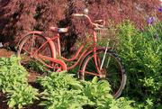 29th Jun 2019 - Y10 M06 D180 Bicycle