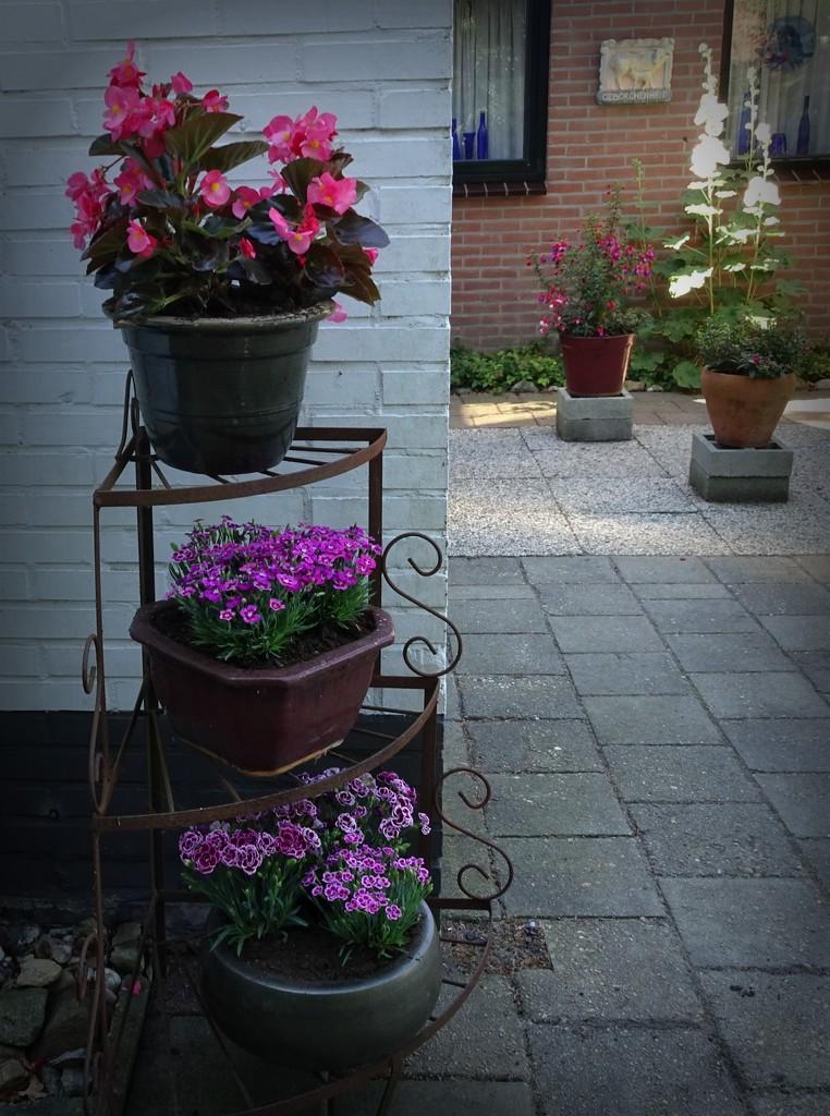 new flowers by gijsje