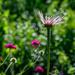 Olympic wild flowers