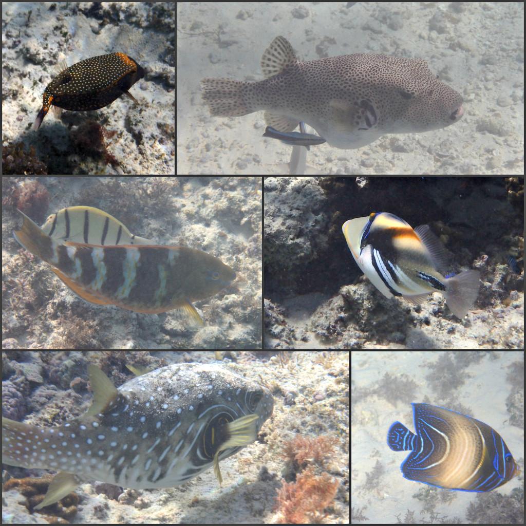 Osprey Fish 1 by leestevo