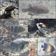 5th Jun 2019 - Osprey Fish 1