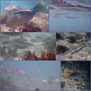 6th Jun 2019 - Osprey Fish 2