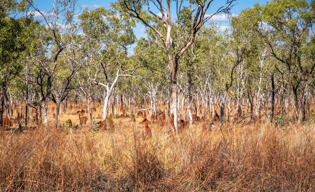 Termite mounds by pusspup