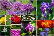 30th Jun 2019 - Summer flowers