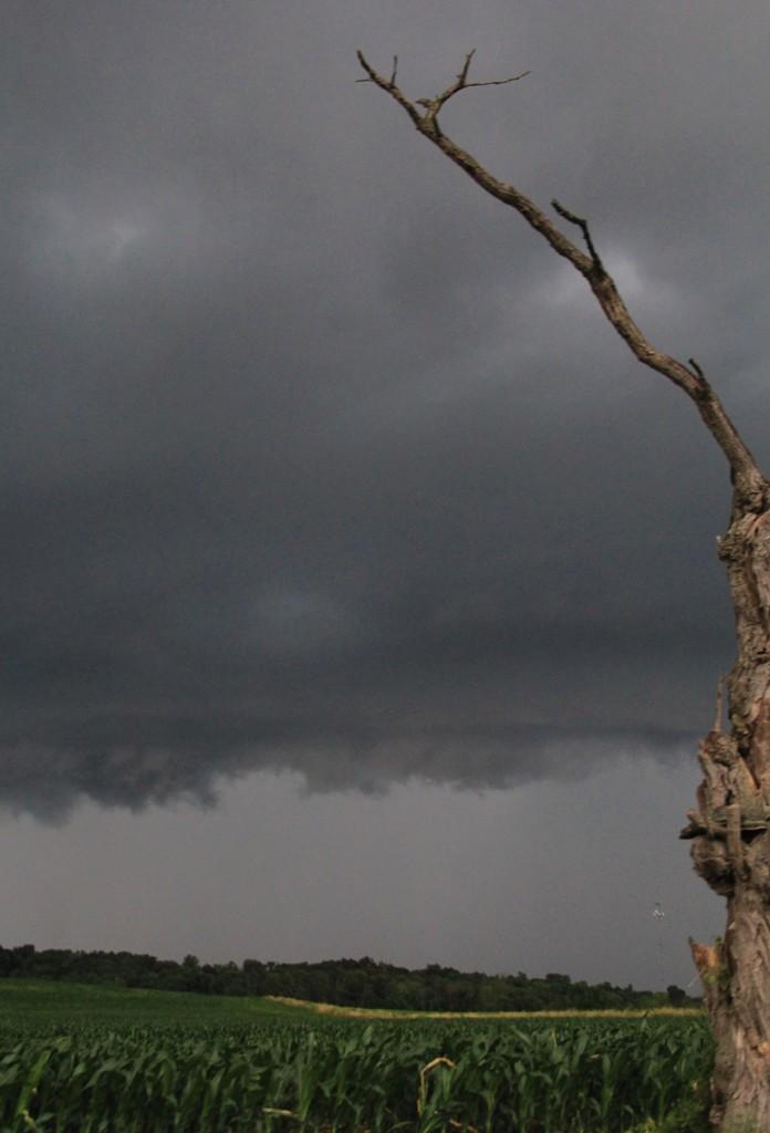 Remaining Tree by digitalrn