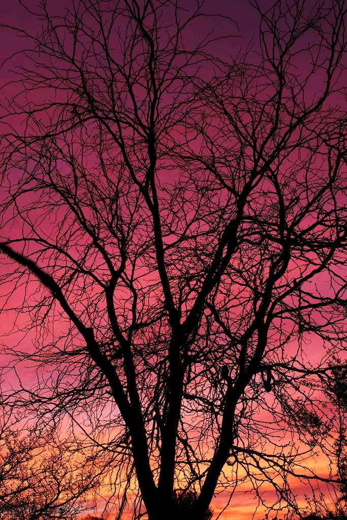 Winter sunrise by maureenpp
