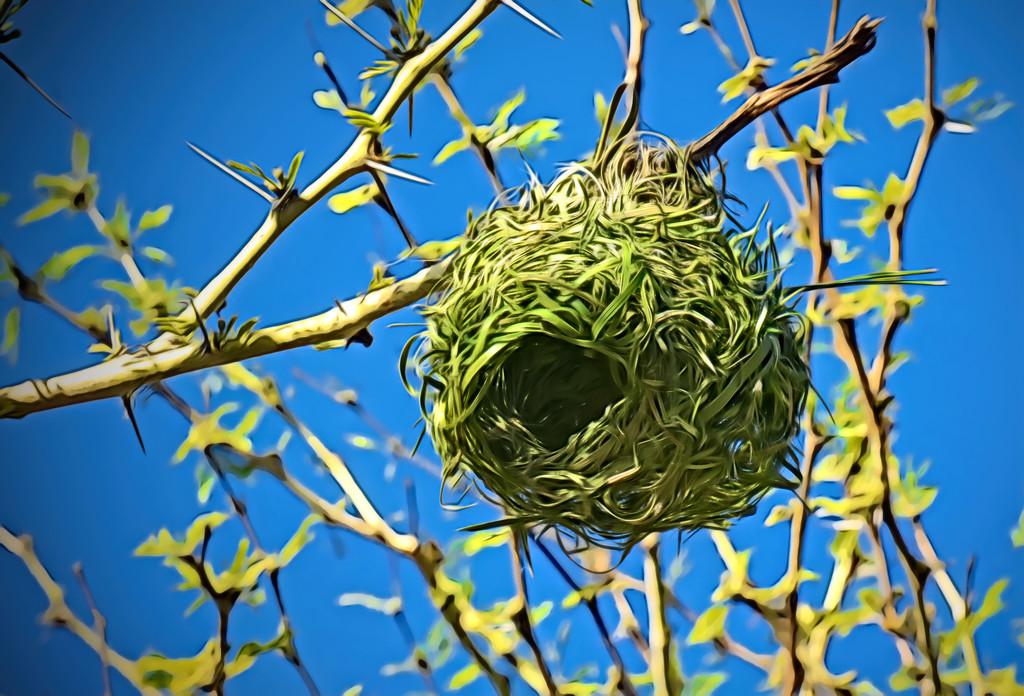 Weaver nest, by ludwigsdiana