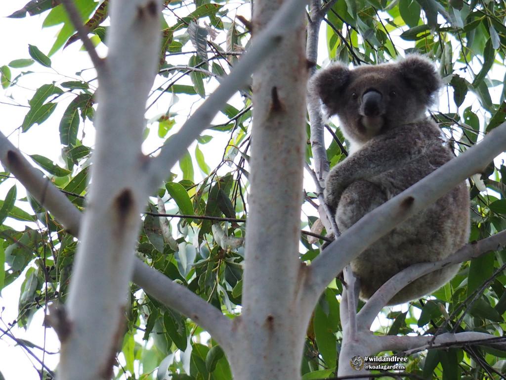 hey Frankie  by koalagardens