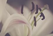 1st Jul 2019 - Abstract Flower