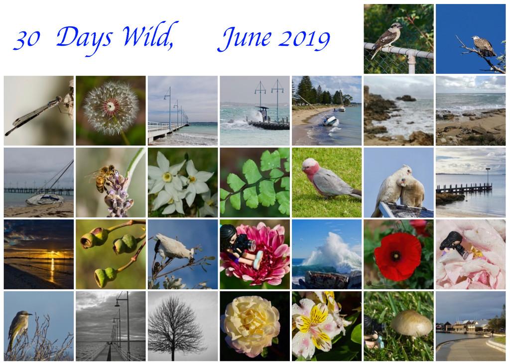 30 Days Wild Calendar View by merrelyn