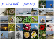 30th Jun 2019 - 30 Days Wild Calendar View