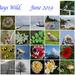 30 Days Wild Calendar View