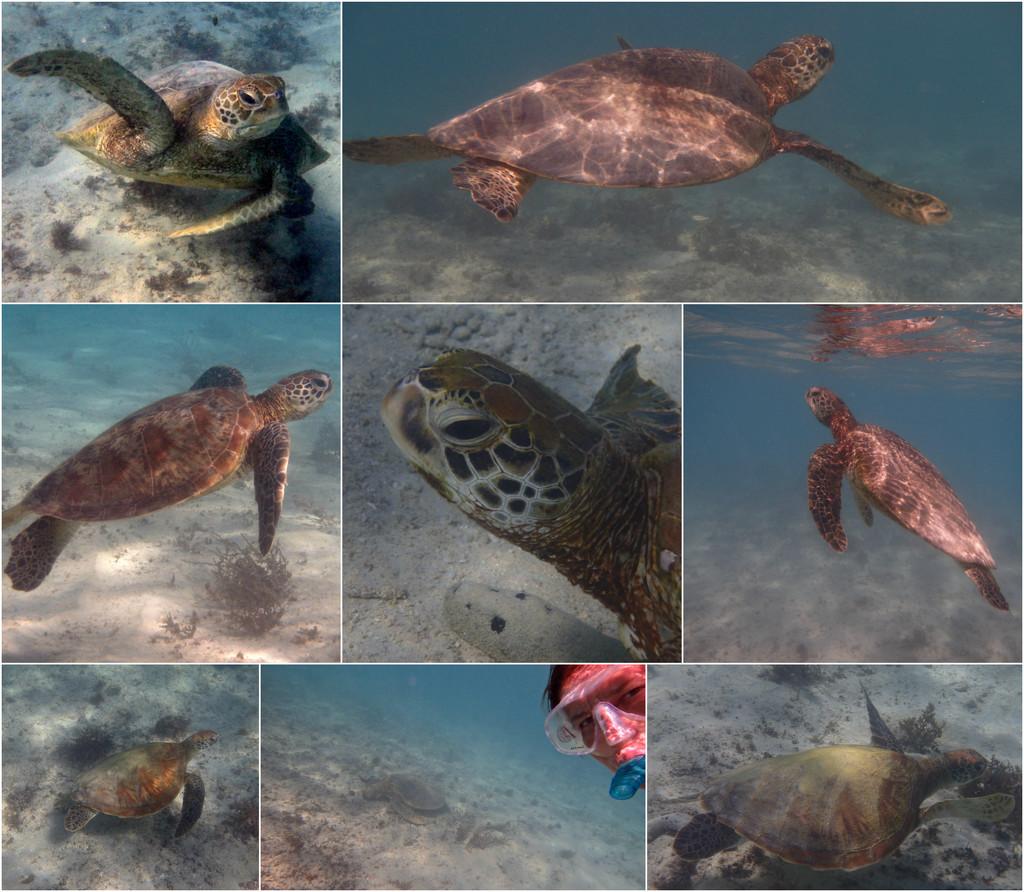 Turtles by leestevo