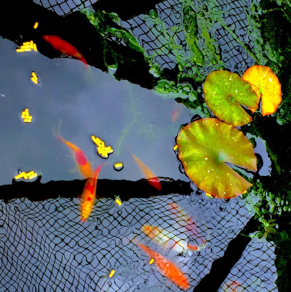 Fish & reflections  by lilaclisa