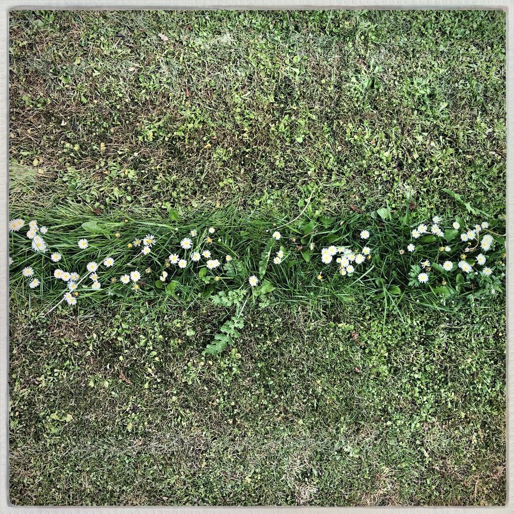 Daisy chain by mastermek