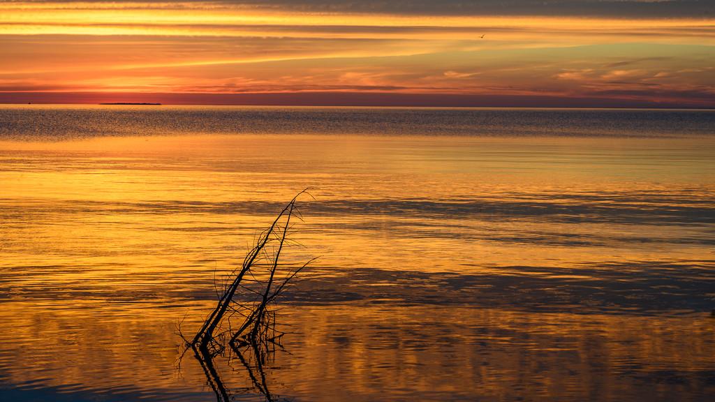 Twigs Bask in the Golden Glow by taffy