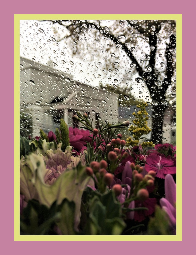 Flowers for a rainy day by lmsa