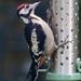Rosie's Woodpecker