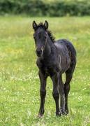 30th Jun 2019 - Foal