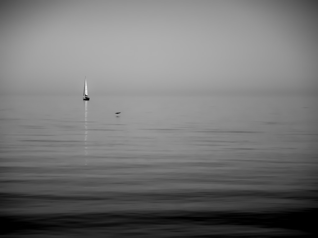 one bird one boat by northy