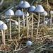 LHG_0275 mushrooms by rontu