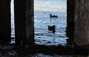 25th Jun 2019 - Under the jetty