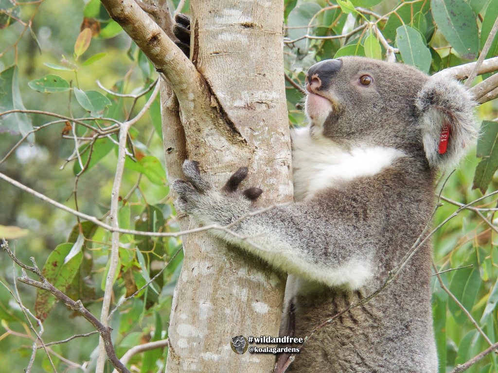 meet Dodge by koalagardens
