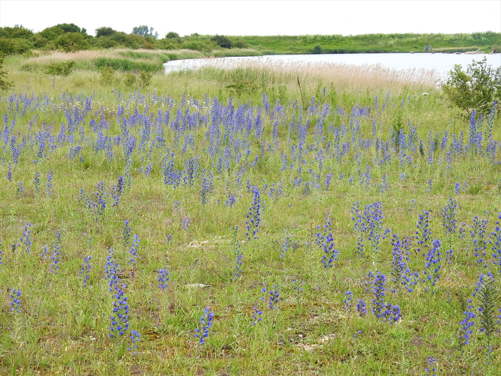 The Shoreline at Snettisham RSPB Reserve by susiemc