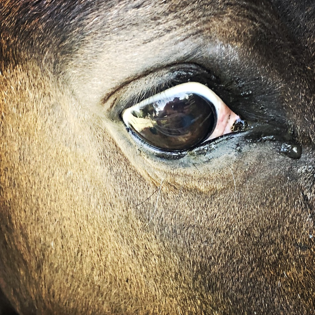 Horse's eye by mastermek