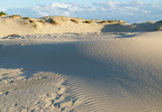 3rd Jul 2019 - Nothing Better Than a Walk on the Dunes