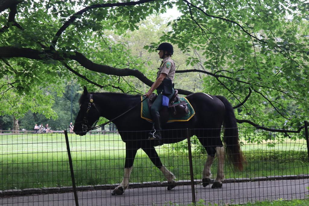 Park Ranger, Central Park by blackmutts