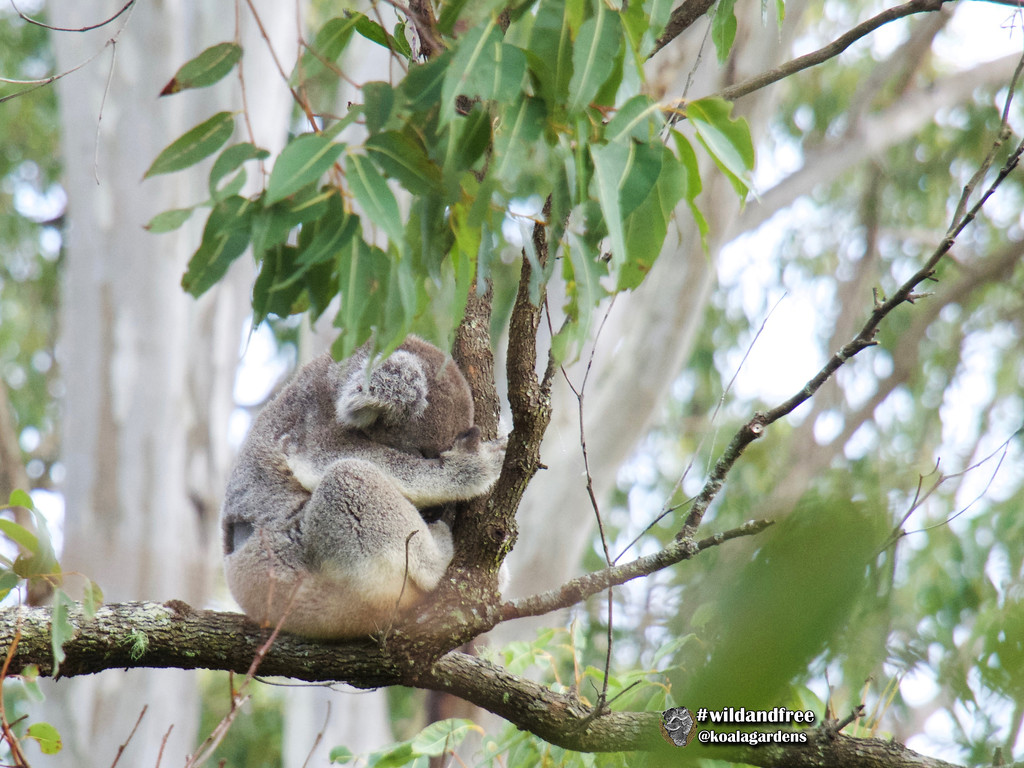 Dodge day 2 by koalagardens