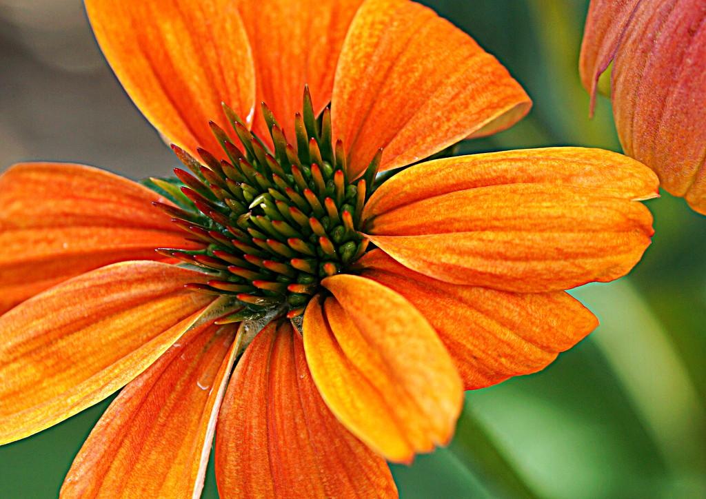 Big Orange by sunnygirl